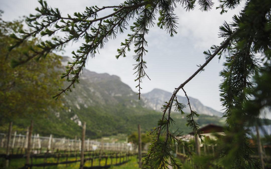 La ciclabile dell'Adige